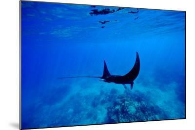 A Manta Ray Glides over a Reef Near the Surface of a Tropical Ocean-Jason Edwards-Mounted Photographic Print