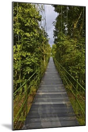 A Boardwalk Leads Through the Rain Forest at Costa Rica's La Selva Biological Station-Kike Calvo-Mounted Premium Photographic Print