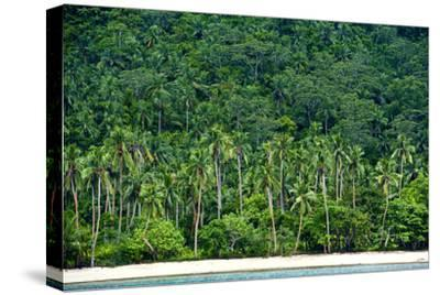 Tropical Rainforest and Palm Trees Line a Beach on a Deserted Island-Jason Edwards-Stretched Canvas Print