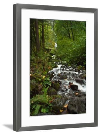 Stream Near Multnomah Falls in Oregon's Columbia River Gorge-Vickie Lewis-Framed Photographic Print