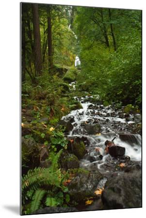Stream Near Multnomah Falls in Oregon's Columbia River Gorge-Vickie Lewis-Mounted Photographic Print