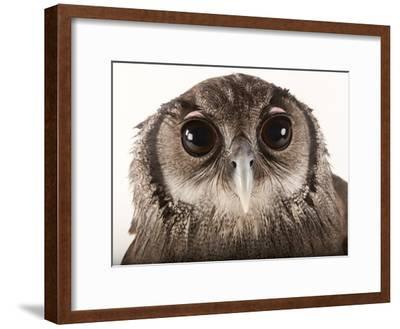 Verreaux's Eagle Owl, Bubo Lacteus, at Zoo Atlanta-Joel Sartore-Framed Photographic Print