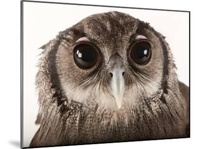 Verreaux's Eagle Owl, Bubo Lacteus, at Zoo Atlanta-Joel Sartore-Mounted Photographic Print