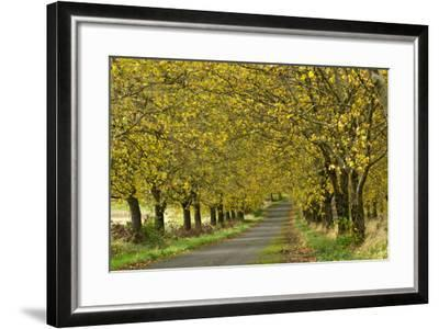 A Row of Trees Line a Country Lane in Fall-Vickie Lewis-Framed Photographic Print