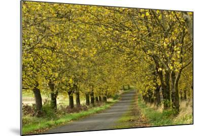 A Row of Trees Line a Country Lane in Fall-Vickie Lewis-Mounted Photographic Print