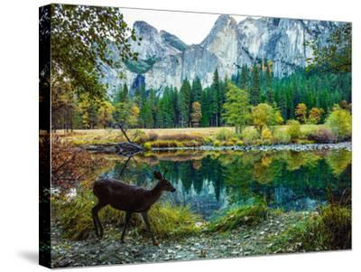 Colorful Trees, Rugged Mountains and a Browsing Deer in a Scenic Autumn Landscape-Babak Tafreshi-Stretched Canvas Print