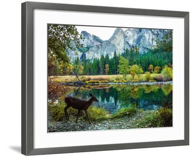 Colorful Trees, Rugged Mountains and a Browsing Deer in a Scenic Autumn Landscape-Babak Tafreshi-Framed Photographic Print