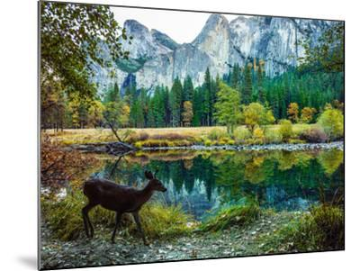Colorful Trees, Rugged Mountains and a Browsing Deer in a Scenic Autumn Landscape-Babak Tafreshi-Mounted Photographic Print