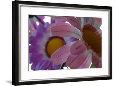 A Close Up View of Two Silk Flowers-Paul Damien-Framed Photographic Print
