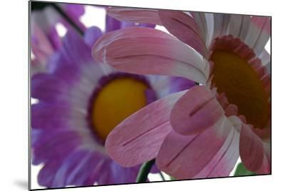A Close Up View of Two Silk Flowers-Paul Damien-Mounted Photographic Print