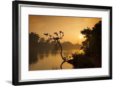 Black Vultures Sun Themselves on a Tree at Sunrise-Alex Saberi-Framed Photographic Print