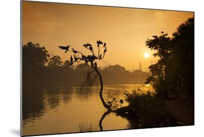 Black Vultures Sun Themselves on a Tree at Sunrise-Alex Saberi-Mounted Photographic Print