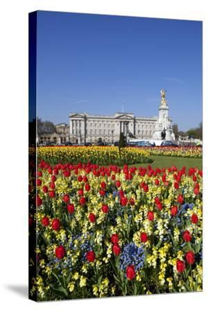 Buckingham Palace and Queen Victoria Monument with Tulips, London, England, United Kingdom, Europe-Stuart Black-Stretched Canvas Print