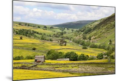 Summer Buttercups in Upper Swaledale Near Thwaite-Mark Sunderland-Mounted Photographic Print