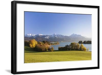 Forggensee Lake and Allgau Alps, Fussen, Ostallgau, Allgau, Allgau Alps, Bavaria, Germany, Europe-Markus Lange-Framed Photographic Print