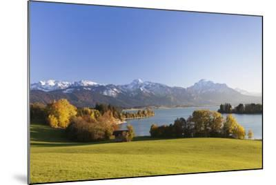 Forggensee Lake and Allgau Alps, Fussen, Ostallgau, Allgau, Allgau Alps, Bavaria, Germany, Europe-Markus Lange-Mounted Photographic Print