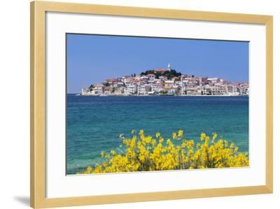 Primosten, Dalmatian Coast, Croatia, Europe-Markus Lange-Framed Photographic Print