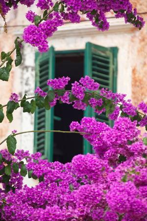 Shuttered Window and Blossom-Frank Fell-Premium Photographic Print