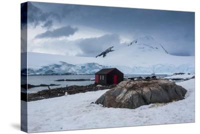 Port Lockroy Research Station, Antarctica, Polar Regions-Michael Runkel-Stretched Canvas Print