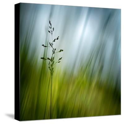 Morning Grass-Ursula Abresch-Stretched Canvas Print