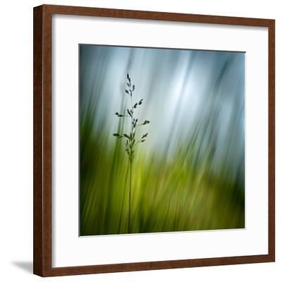 Morning Grass-Ursula Abresch-Framed Photographic Print
