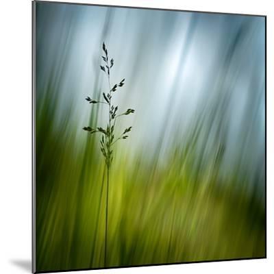 Morning Grass-Ursula Abresch-Mounted Photographic Print