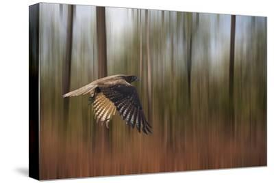 Kakadu Dreaming 1-Margaret Morgan-Stretched Canvas Print