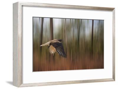 Kakadu Dreaming 1-Margaret Morgan-Framed Photographic Print