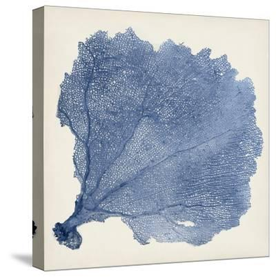 Sea Fan V-Vision Studio-Stretched Canvas Print