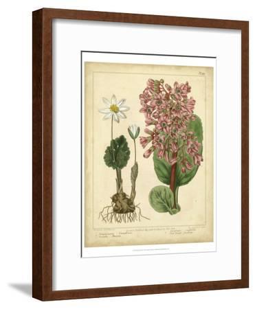 Garden Flora III-Sydenham Edwards-Framed Art Print