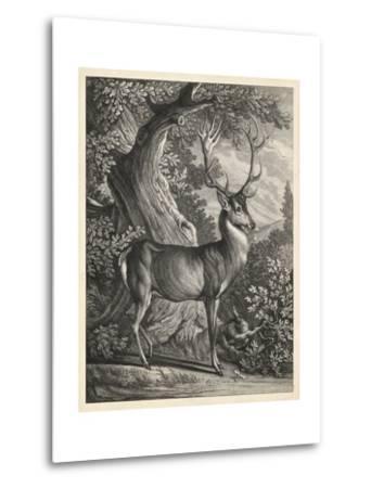 Woodland Deer I-Ridinger-Metal Print