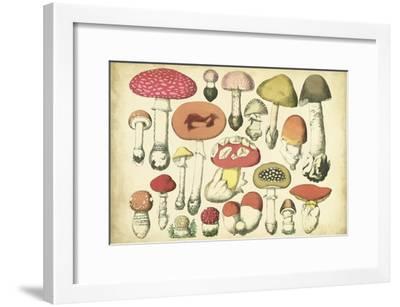 Vintage Mushroom Chart-Vision Studio-Framed Art Print