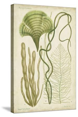 Seaweed Specimen in Green II-Vision Studio-Stretched Canvas Print