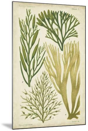 Seaweed Specimen in Green III-Vision Studio-Mounted Art Print
