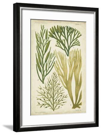 Seaweed Specimen in Green III-Vision Studio-Framed Art Print