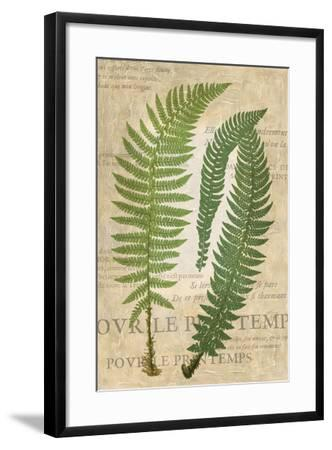 Fern Folio III-Vision Studio-Framed Art Print