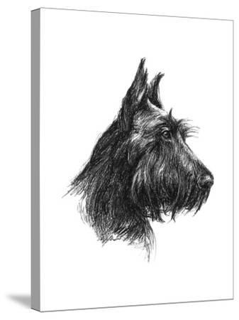 Canine Study II-Ethan Harper-Stretched Canvas Print