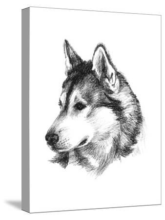 Canine Study III-Ethan Harper-Stretched Canvas Print