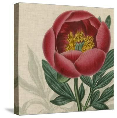 Floral Delight V-Vision Studio-Stretched Canvas Print