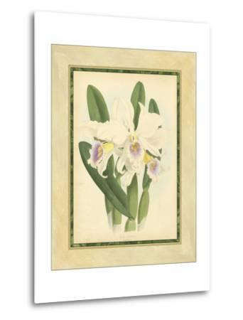 Fitch Orchid II-Fitch-Metal Print