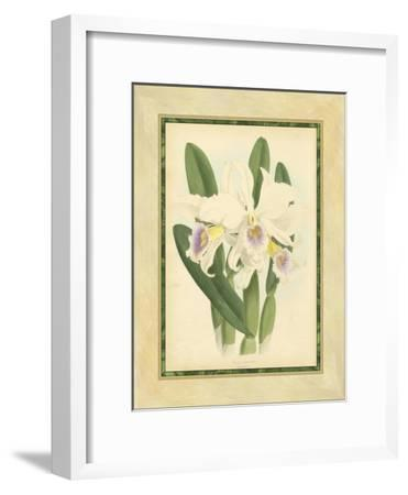 Fitch Orchid II-Fitch-Framed Art Print
