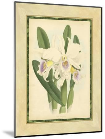 Fitch Orchid II-Fitch-Mounted Art Print