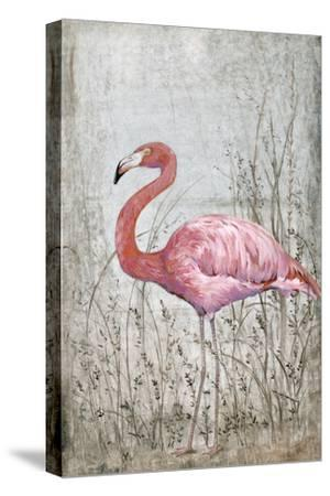 American Flamingo II-Tim O'toole-Stretched Canvas Print