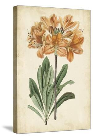 Botanical Display V-Vision Studio-Stretched Canvas Print