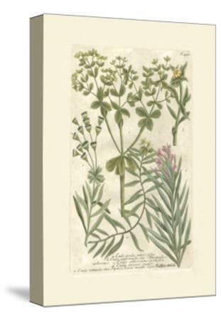 Garden Varietals III-Johann Wilhelm Weinmann-Stretched Canvas Print