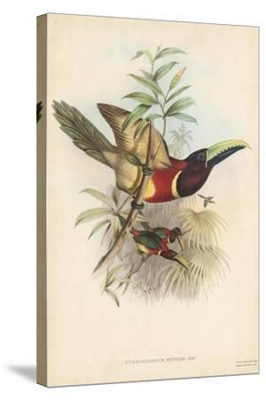 Tropical Toucans III-John Gould-Stretched Canvas Print