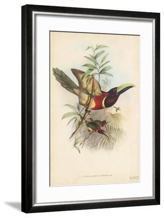 Tropical Toucans III-John Gould-Framed Art Print