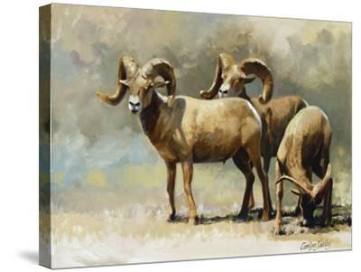 Mountain High-Carolyne Hawley-Stretched Canvas Print