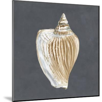 Shell on Slate VI-Megan Meagher-Mounted Art Print