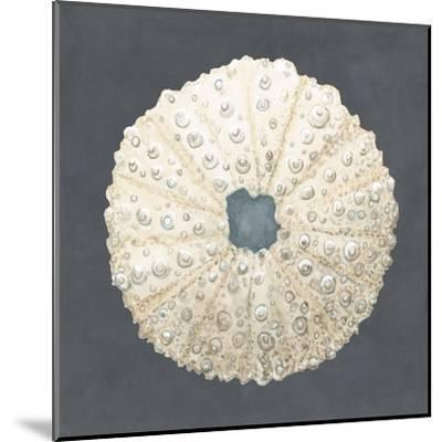 Shell on Slate VII-Megan Meagher-Mounted Art Print